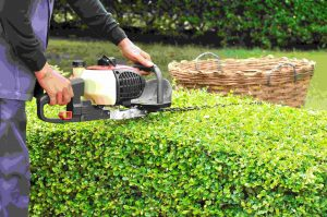 Hedge Cutting and Hedge Trimming in West Lothian