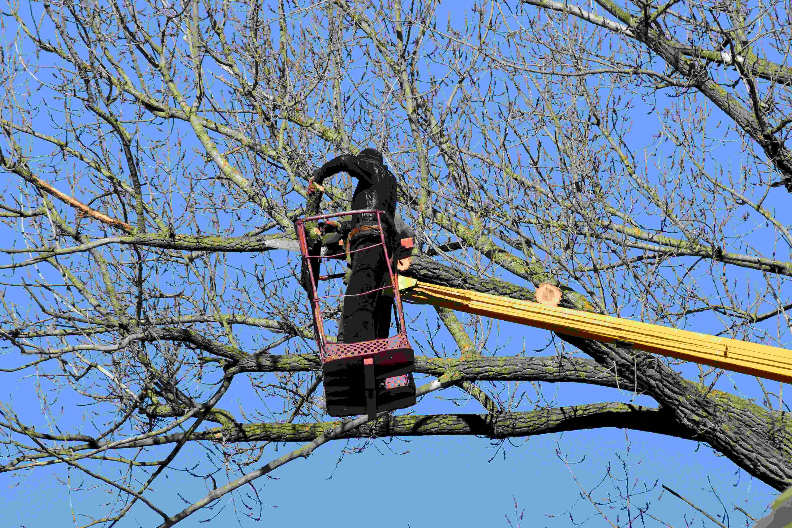 Tree Surgeons from West Lothian Tree Servicing