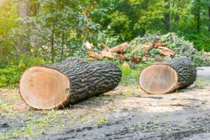 Tree Surgery performed by West Lothian Tree Servicing